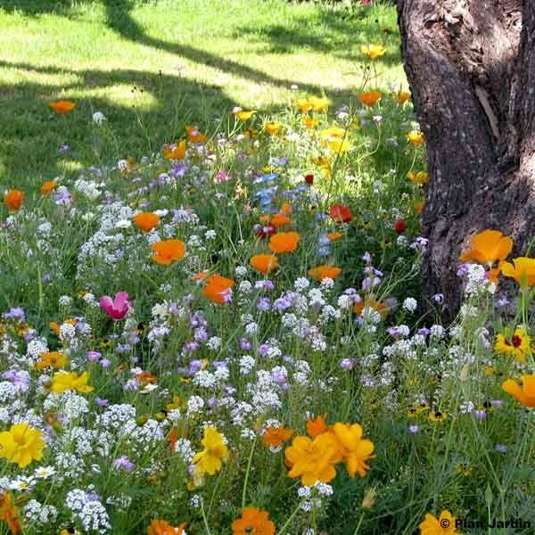 m lange pour pieds d arbres boite 8 m2 plantes pour le jardin promesse de fleurs jardin. Black Bedroom Furniture Sets. Home Design Ideas