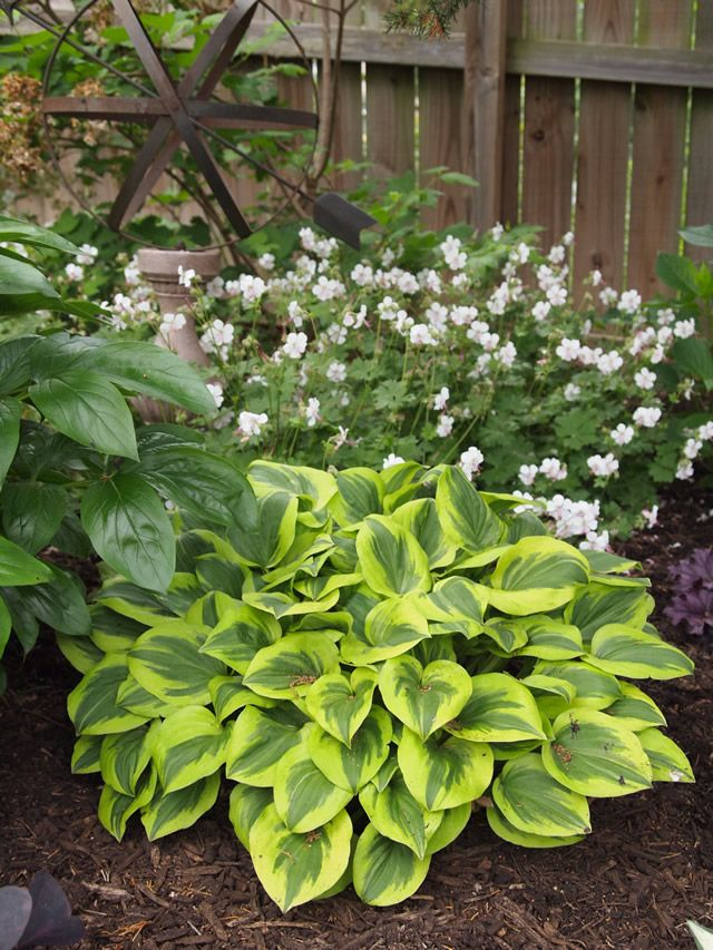 Perfect Summer Weather Partial Shade Plants Fine Gardening