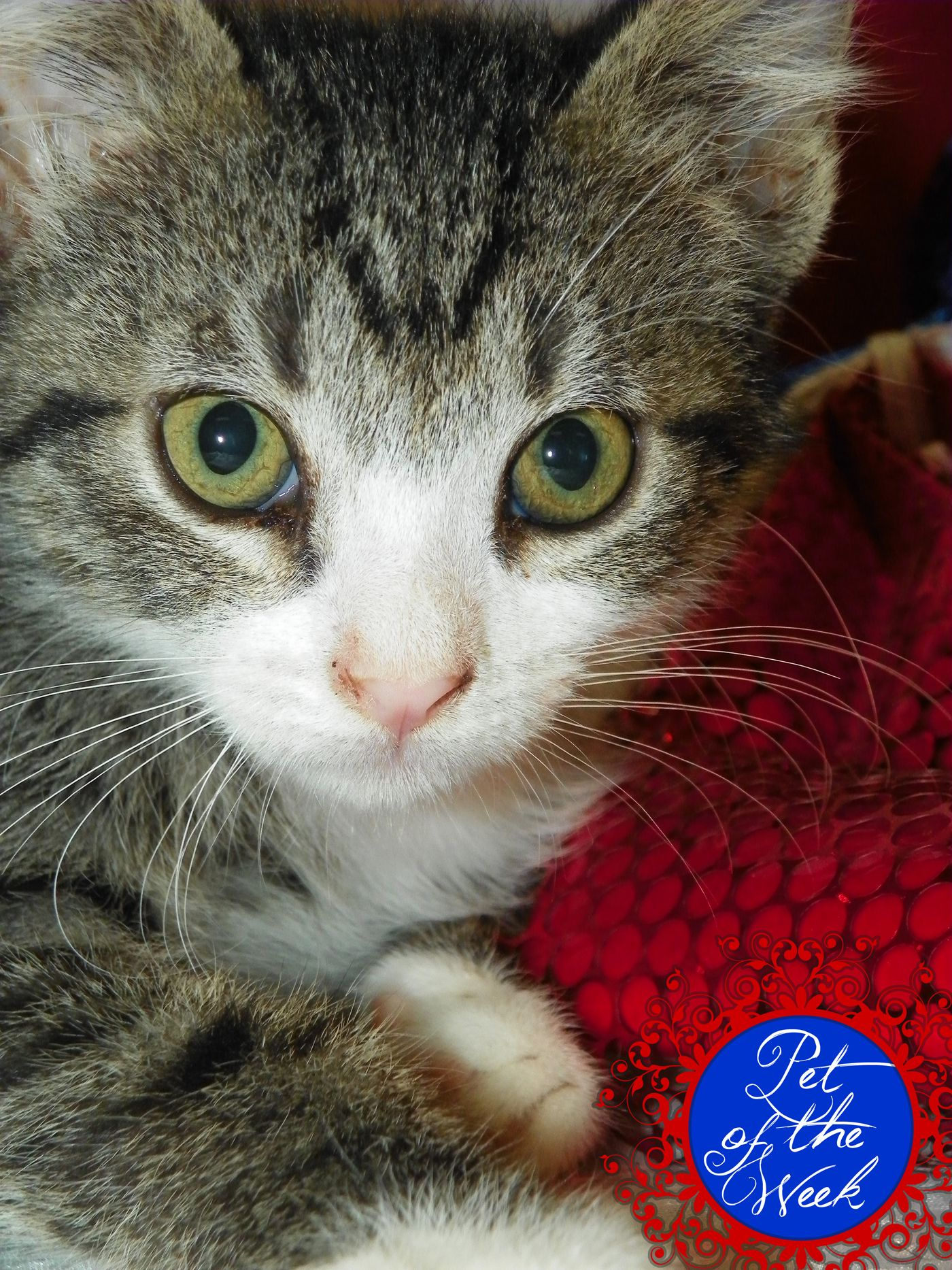 Quick is one of the many cute kittens available at the La