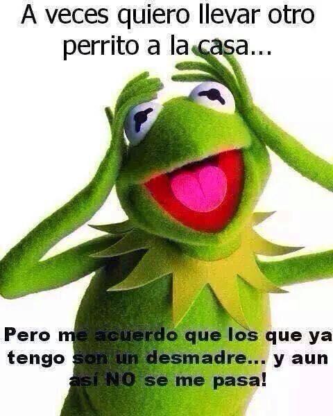 Meme De La Rana Rene Ranas Memes De La Rana Chistes Para Amigos