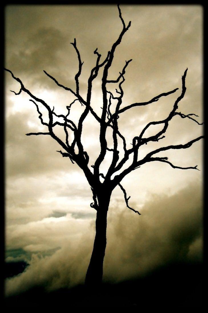 Dead Tree In Shadows Dark Tree Tree Drawing Dead Tree Tattoo