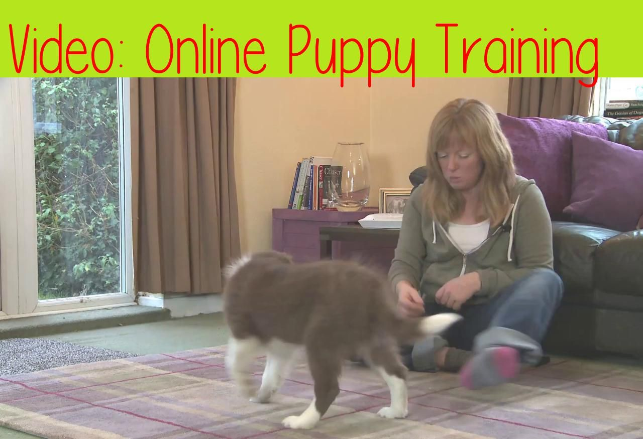 Online Puppy Trainingthis Is An Example Video From My Online Puppy