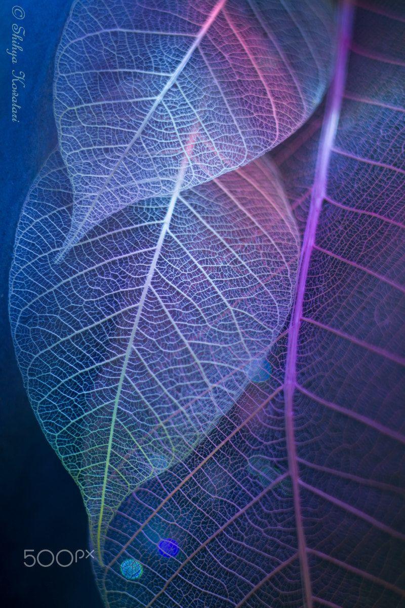 Colors Leafs Wonder Macro by Shihya Kowatari on 500px