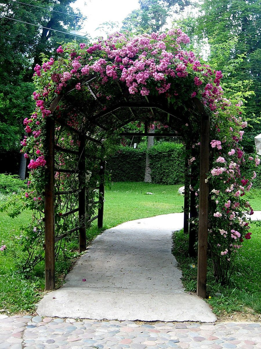 Roses In Garden: Generous Arbor With Old Fashioned Climbing Roses