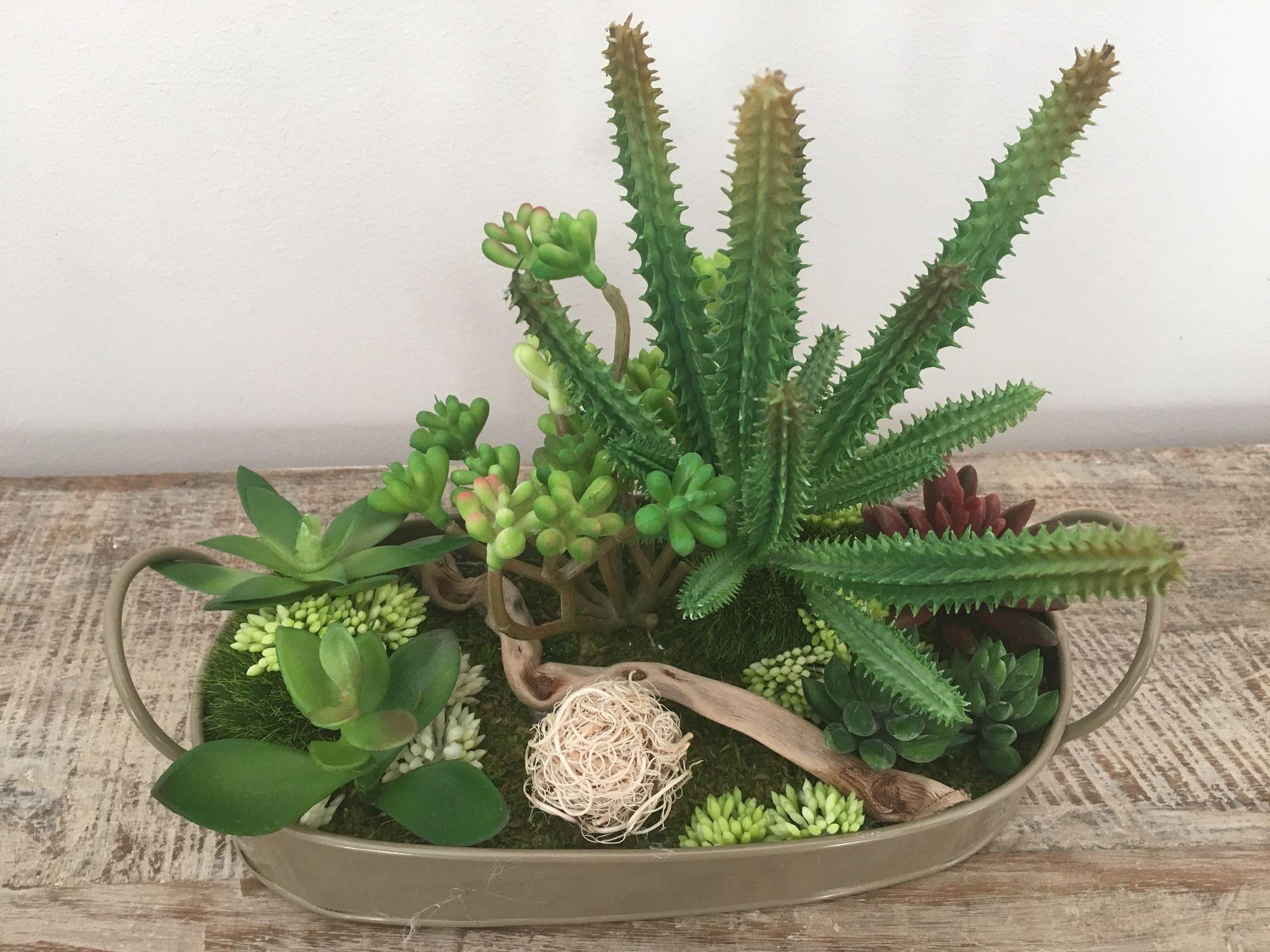 r sultat de recherche d 39 images pour compos cactus cactus pinterest. Black Bedroom Furniture Sets. Home Design Ideas