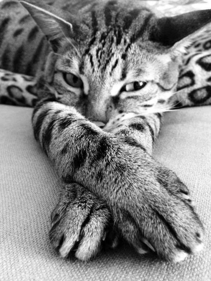 Instagram: @Tierweltliebe - Faulenzende Katze