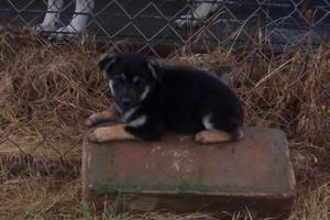 Adopt Pup 2 On Favores