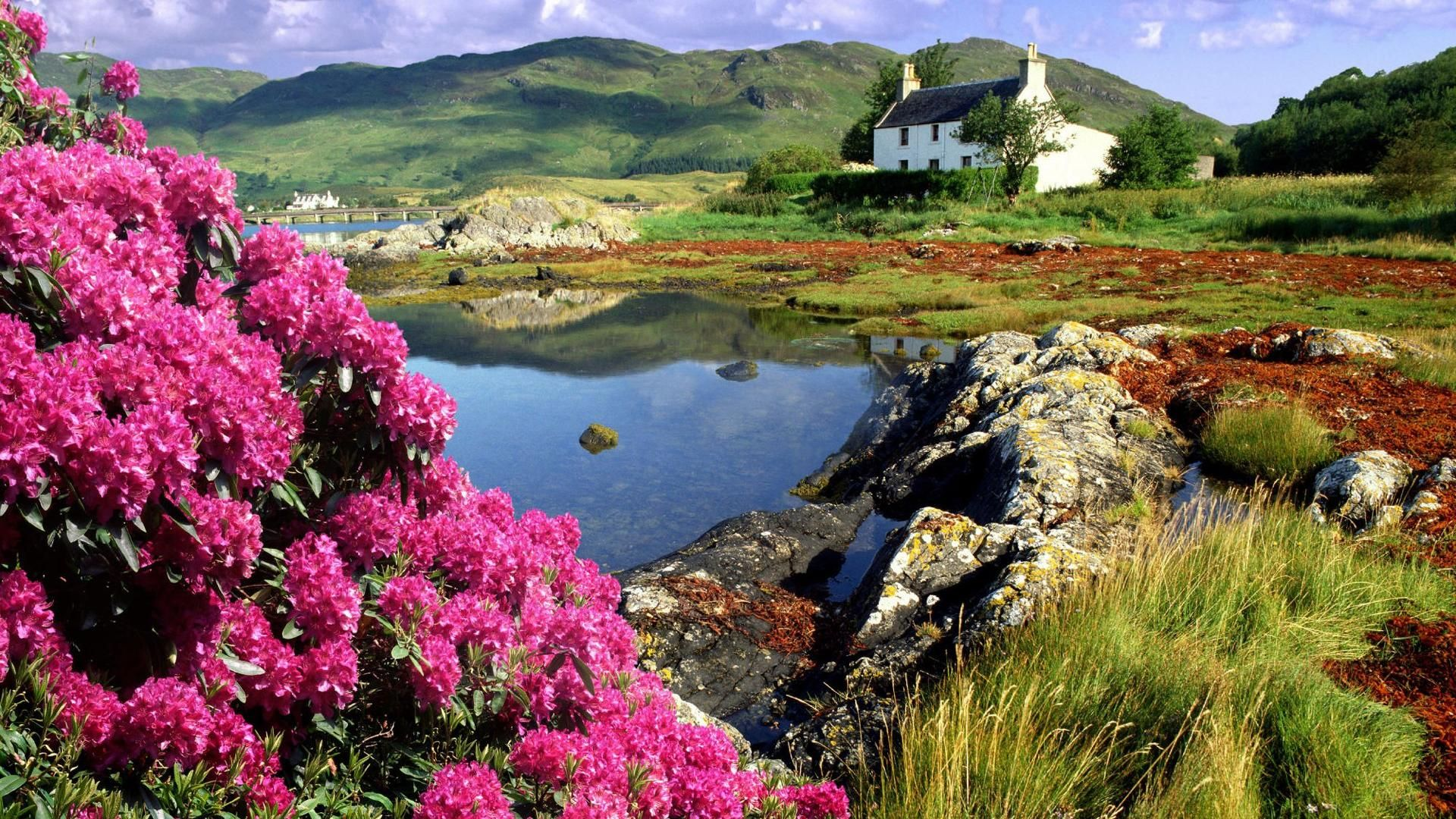 Beautiful Pictures Of Flower Scenery Beautiful Flowers And House