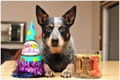Happy First Birthday Olive Australian Cattle Dogs Rule My