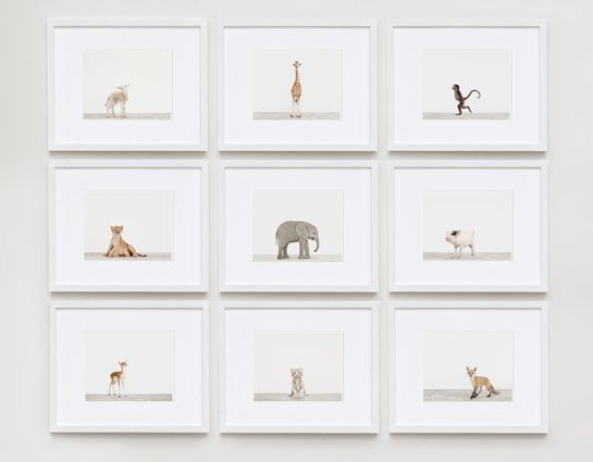 The Animal Print Shop by Sharon Montrose. For more beautiful wildlife products for baby visit https://www.zazzle.com/collections/baby_boutique-119594894884747061?rf=238201378332581352&CMPN=share_dclit&lang=en&social=true