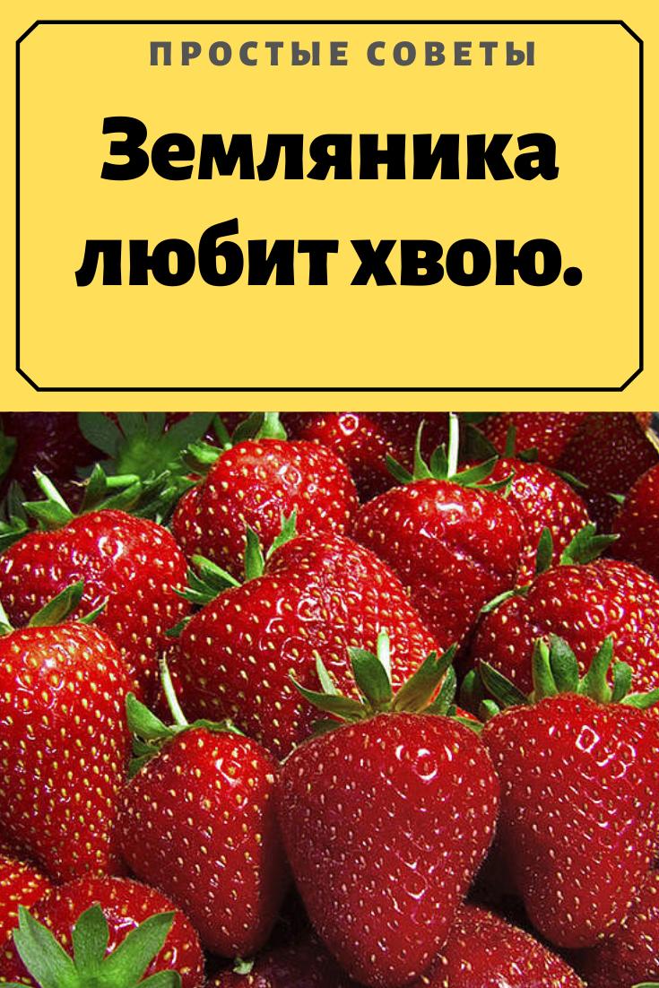 кто есть ягоды клубники на грядке