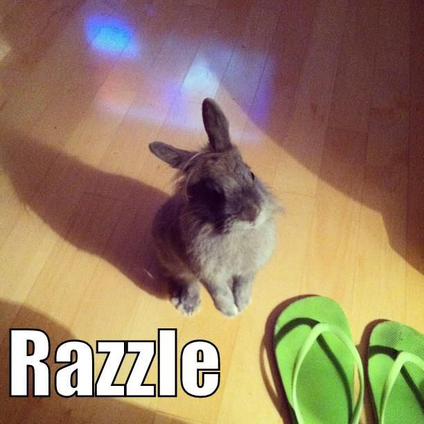 click like if you love this cute bun named razzle thanks goes to