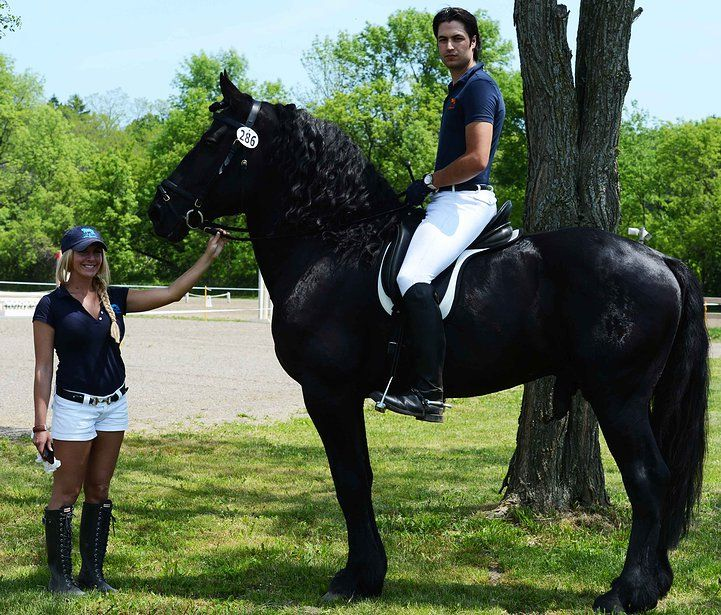 Casa Arte Equestre Breeding Training And Sales Ambassador Pbf