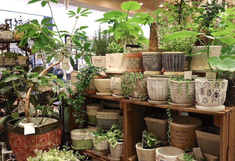 素敵な発見がたくさん 園芸ショップ探訪5 兵庫 みどりの雑貨屋 園芸 雑貨屋 ガーデニング