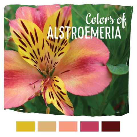 Alstroemeria Plants Plant Identification Flower Identification
