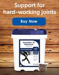 What is the best equine joint supplement?