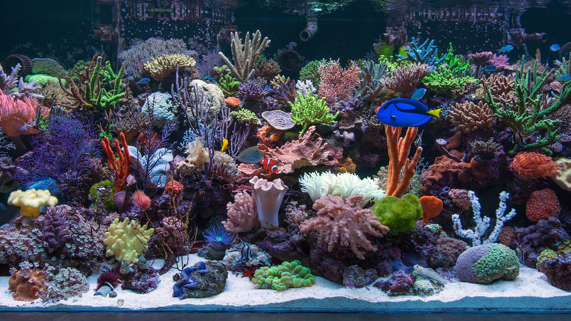 Marine aquarium google search artistic aquarium for Marine fish tanks