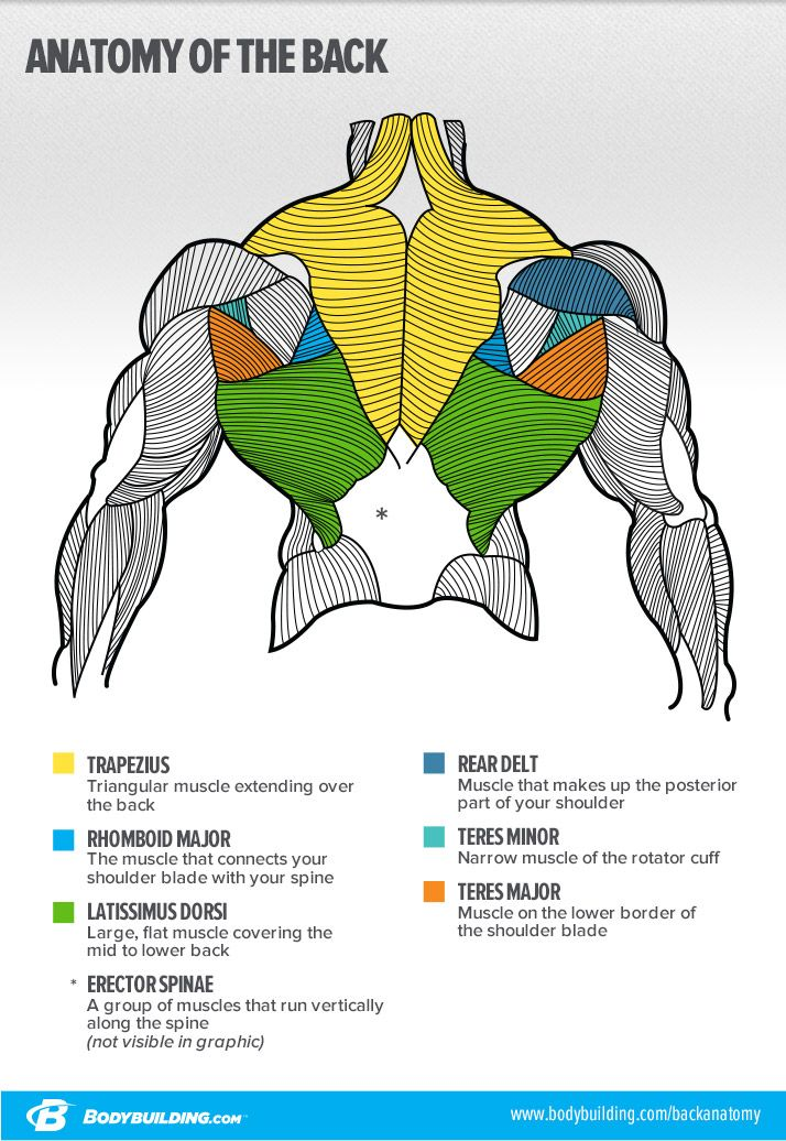 8 Things You Should Never Do On Back Day | Fitness Tips | Pinterest ...