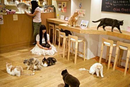 Bruxelles Bar A Chats Google Search Bar à Chat Chat Japonais Maison Chat