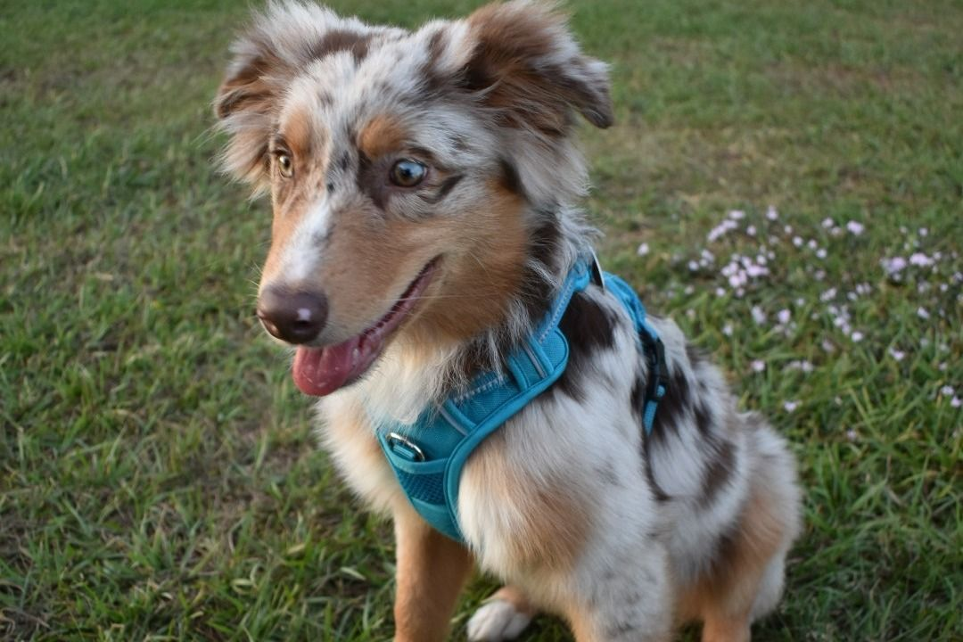 Fundraiser By Alex Messmer Puppy Heart Surgery Puppies Heart