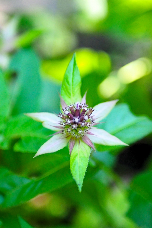 #macrophotography #fowerphotography #plantphotography #botanical
