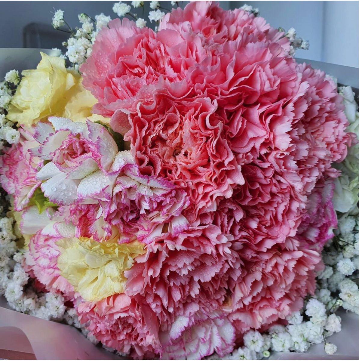 Pink Carnation Flowers Carnation Order Flowers Online Wedding Flowers Pink Carnations Carnation Flower Online Wedding Flowers