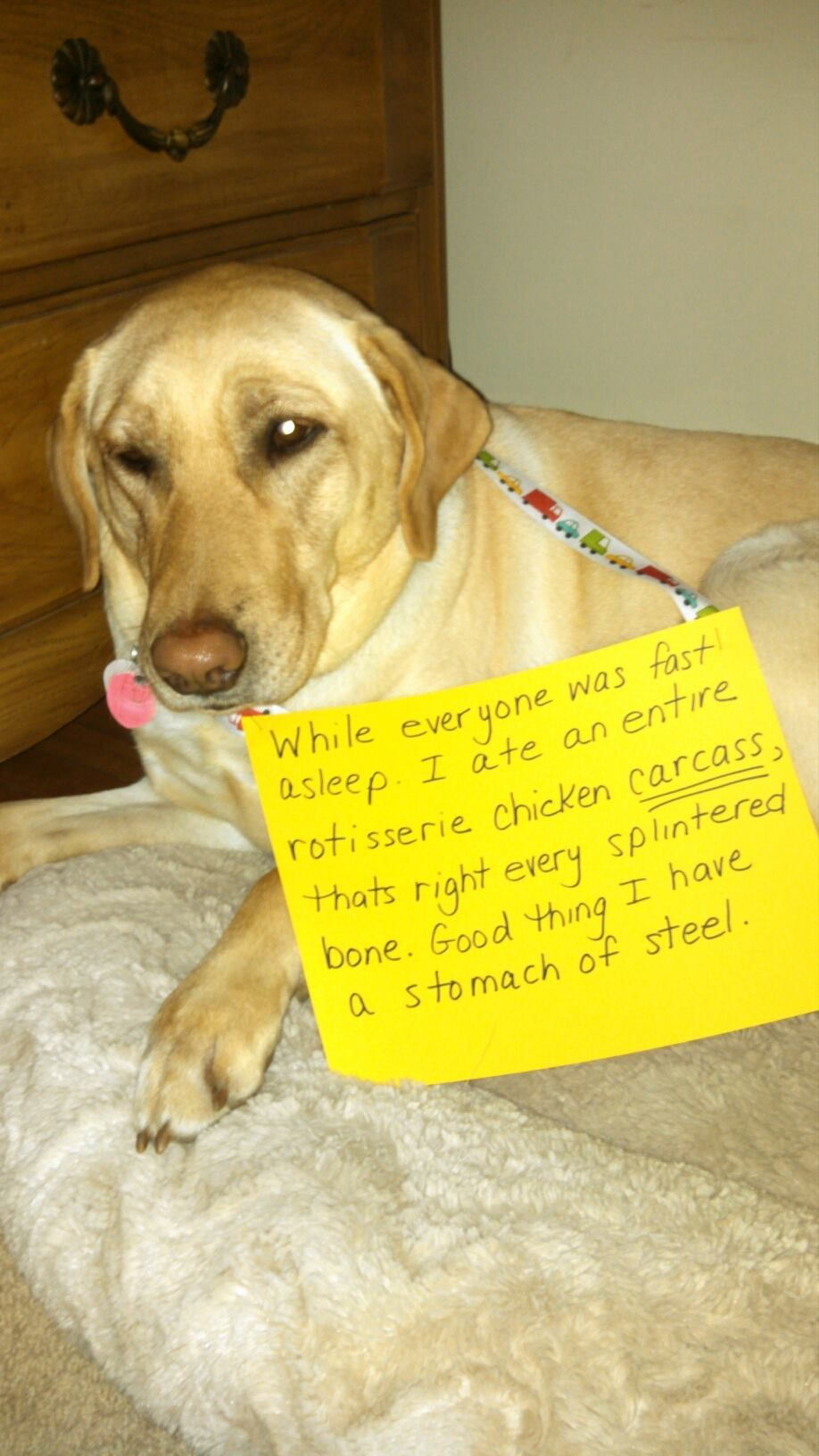 My Dog Ate Chicken Bones, What Can I Do Dog shaming, Dog
