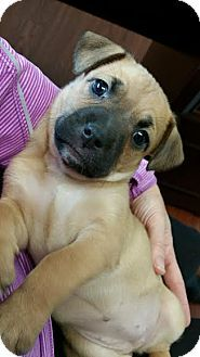 Pin By Chanti Cole On Rescue Dogs Labrador Retriever Mix