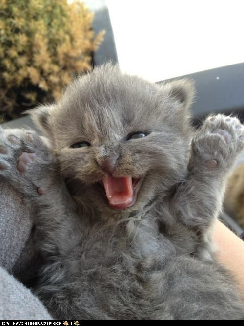 funny pictures - Cyoot Kitteh of teh Day: Ai Lubbz U DISSSSSSSSSS MUCH!
