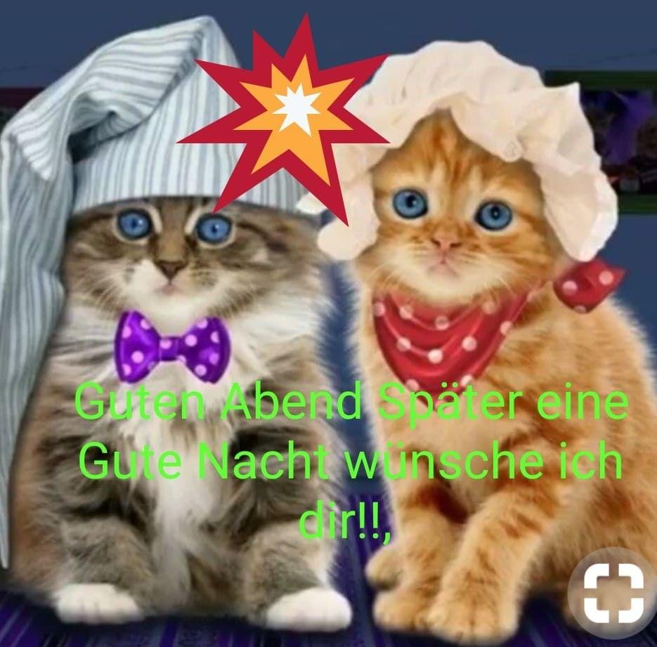 Gute Nacht Von Gute Nacht Katze Gute Nacht Nacht
