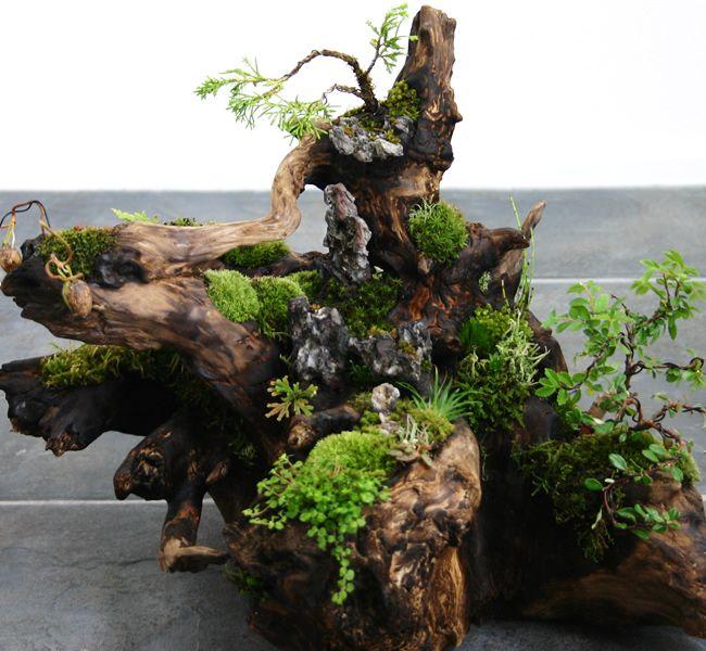 driftwood moss bonsai garden pinterest garten garten ideen und pflanzen. Black Bedroom Furniture Sets. Home Design Ideas