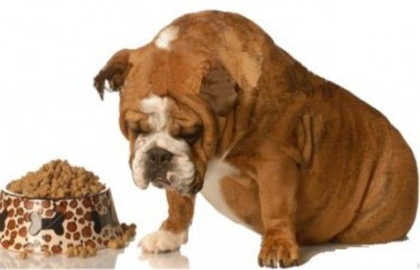 How To Feed A Dog That Won T Eat My Dog Wont Eat Dogs What To