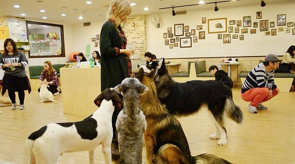 Image Results for Jangsan Puppy Cafe korea