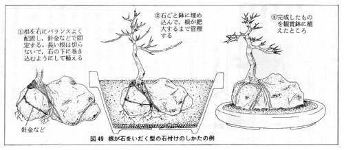 石付き盆栽作り方