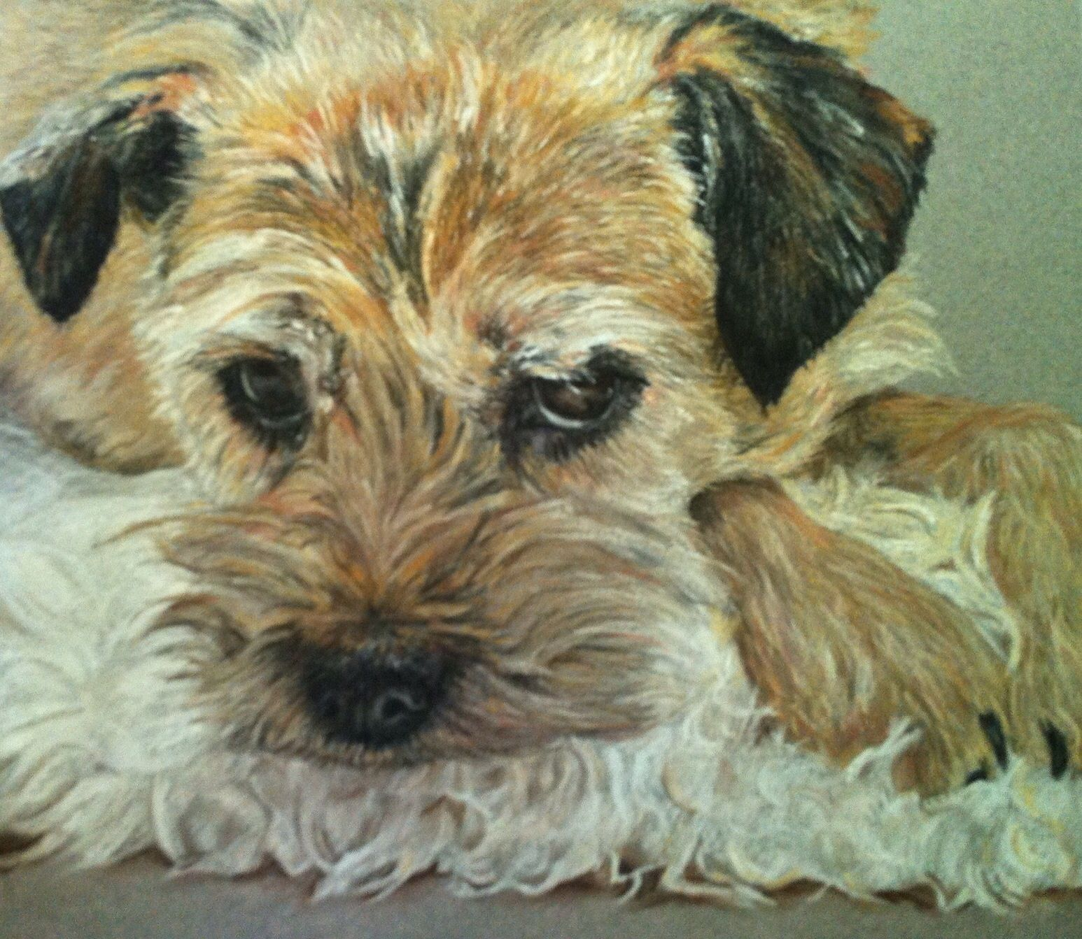A Pastel Painting Of Lucie The Border Terrier Border Terrier