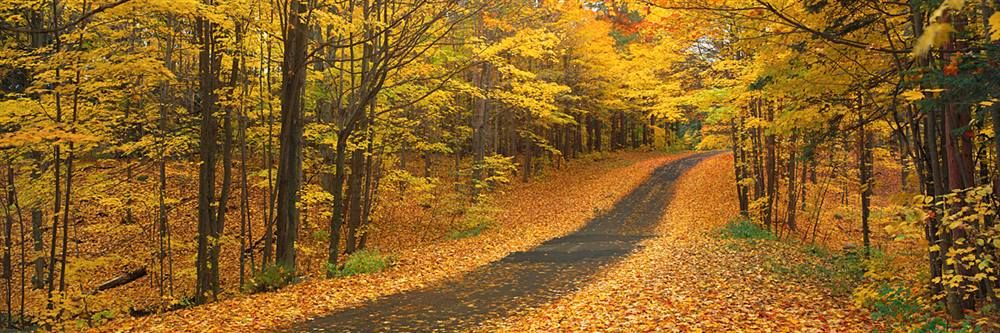 Autumn Road, Emery Park, New York State http://www.walls360.com/seasons-wall-graphics-s/2002.htm
