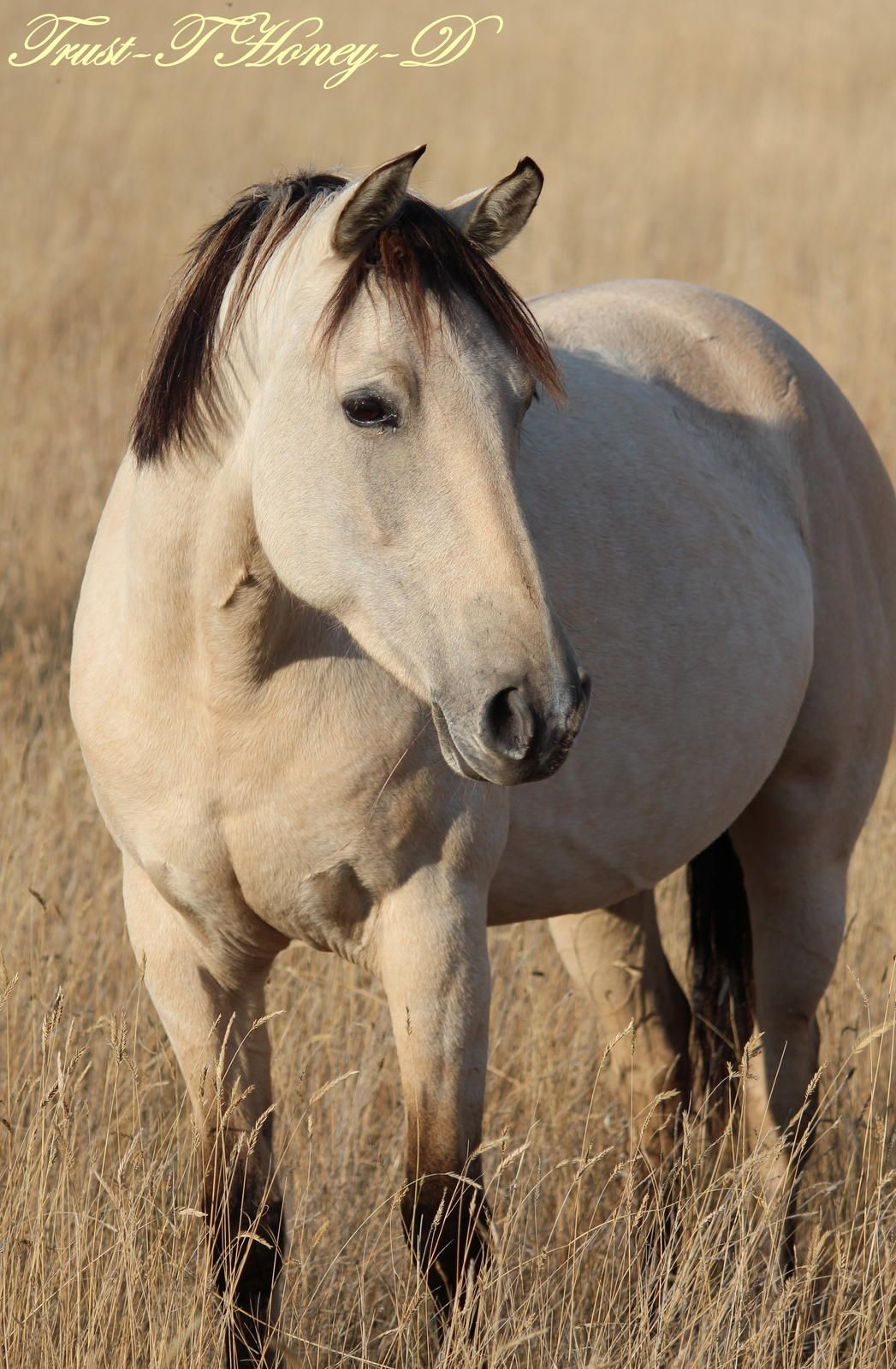 buckskin mare, such a sweet gentle face