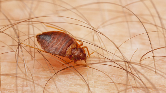 The 10 Best Resources for Best Flea Bomb Bed bugs, Rid