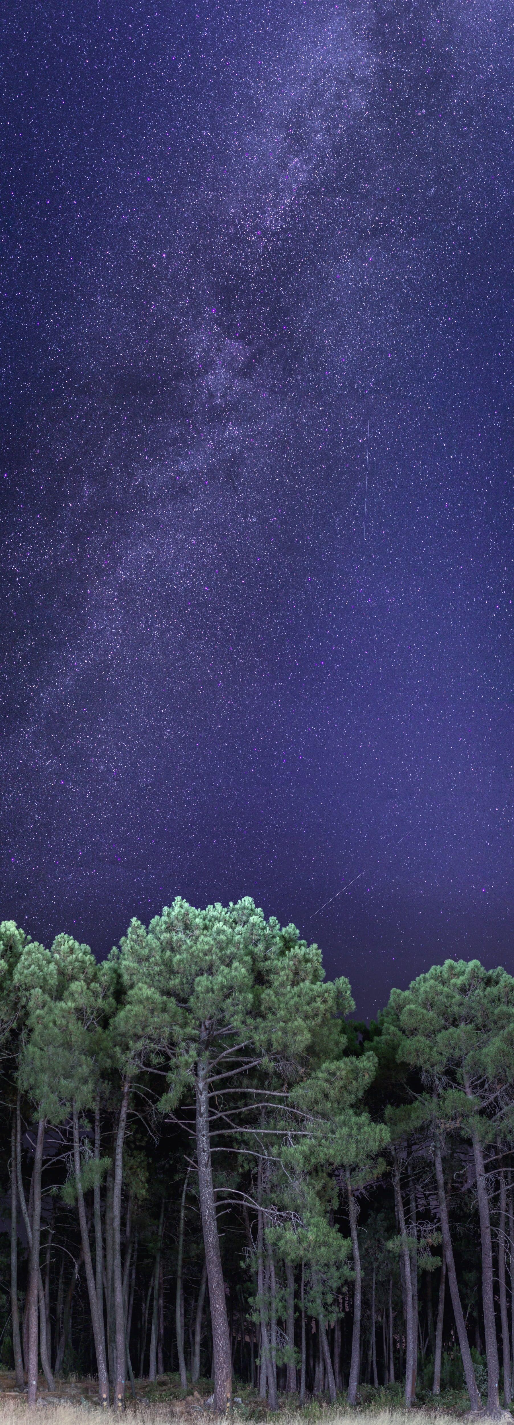 Night Star Via Lactea Universe Forest Nature Sky Panoramic Vertical 4k Wallpaper Hdwallpaper Desktop Imac Desktop Imac Cactus Backgrounds
