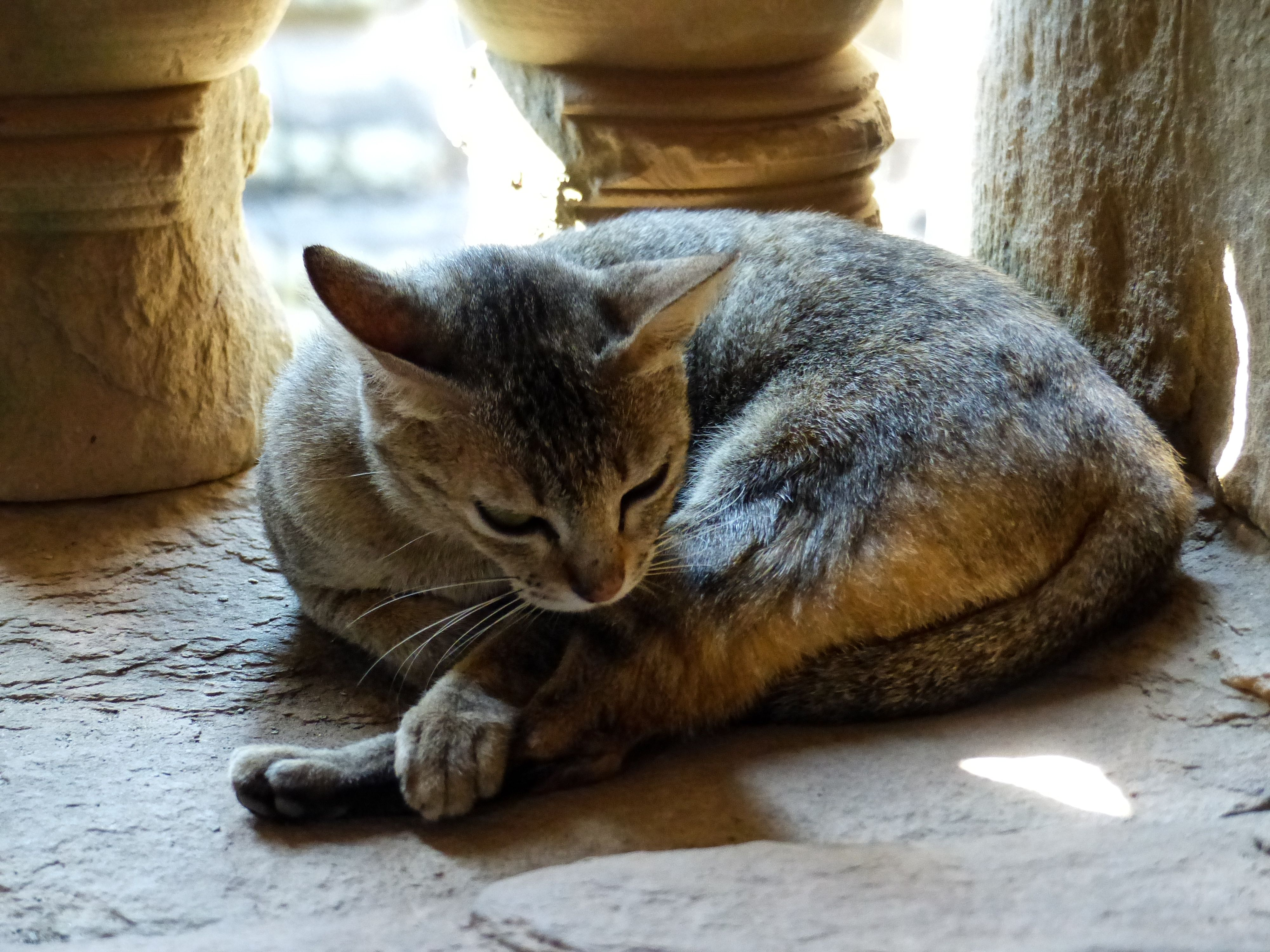 Do You Know The Difference Between A Stray Cat And A Feral Cat A Stray Cat Has Been Socialized To People At Some Point But H Feral Kittens Animals Feral Cats