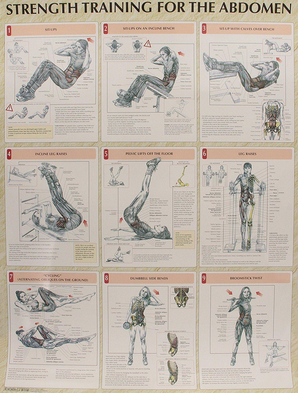 Strength Training Anatomy Poster Series Personal Training
