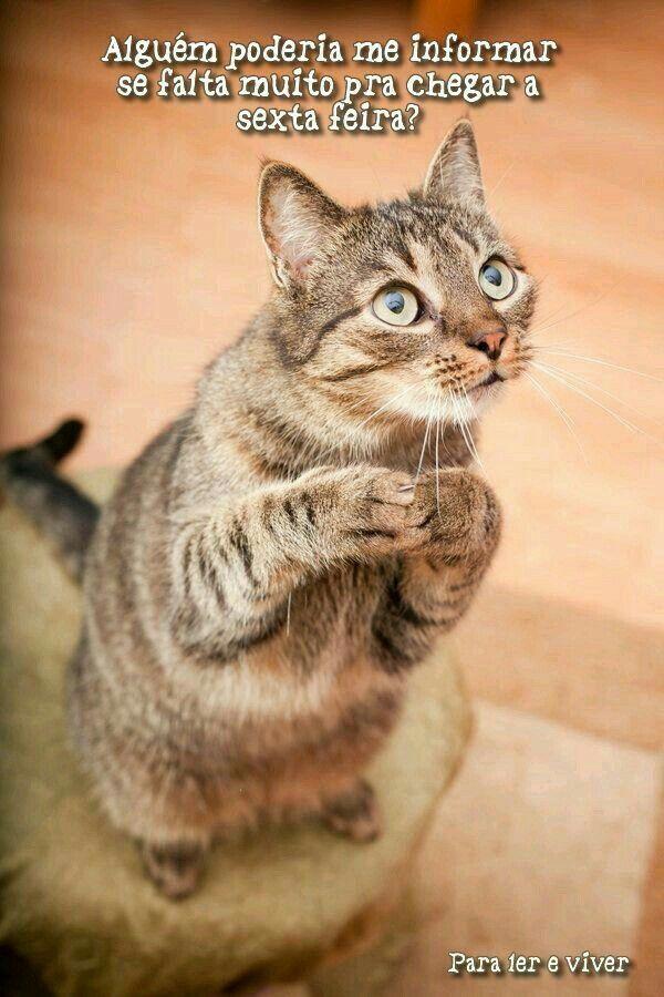 Quem Não Quer Gatos Gatos Bonitos E Fotos De Gatinhos