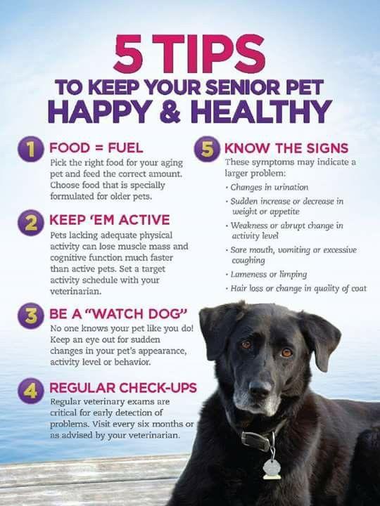 Ready Set Go Charge Up Your Pet For Designer Dog Kennels Dog