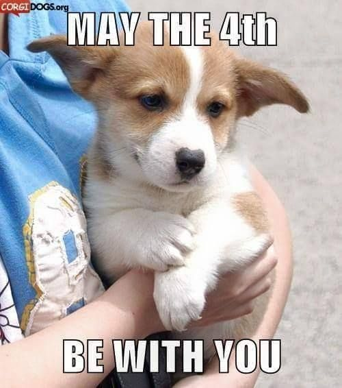 May The 4th Be With You Dog: May The 4th Be With You, The Force Is Strong With This