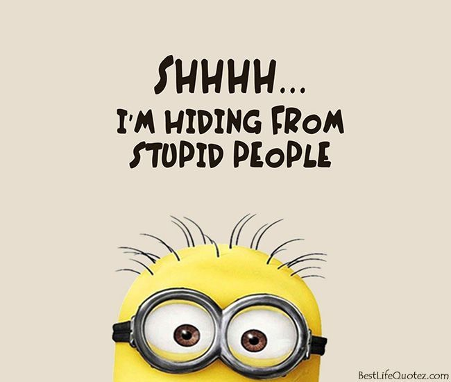Cute Profile Pics Not People Am Hiding From Stupid People Cute