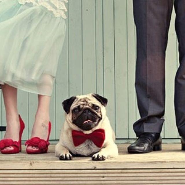 Wedding Pug Dog Wedding Outfits Funny Wedding Photos Dog Wedding