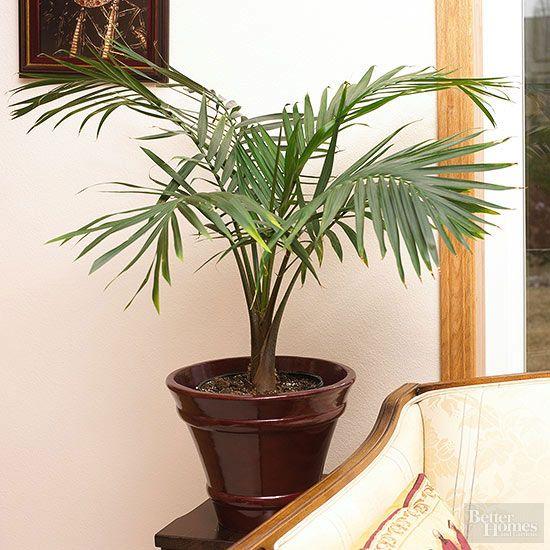 Plantes dintérieur pour faible luminosité