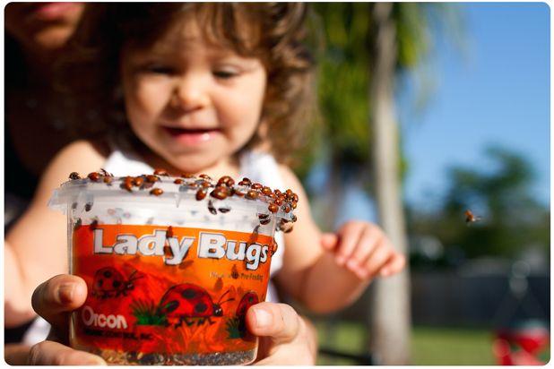 ladybugs! FTW!