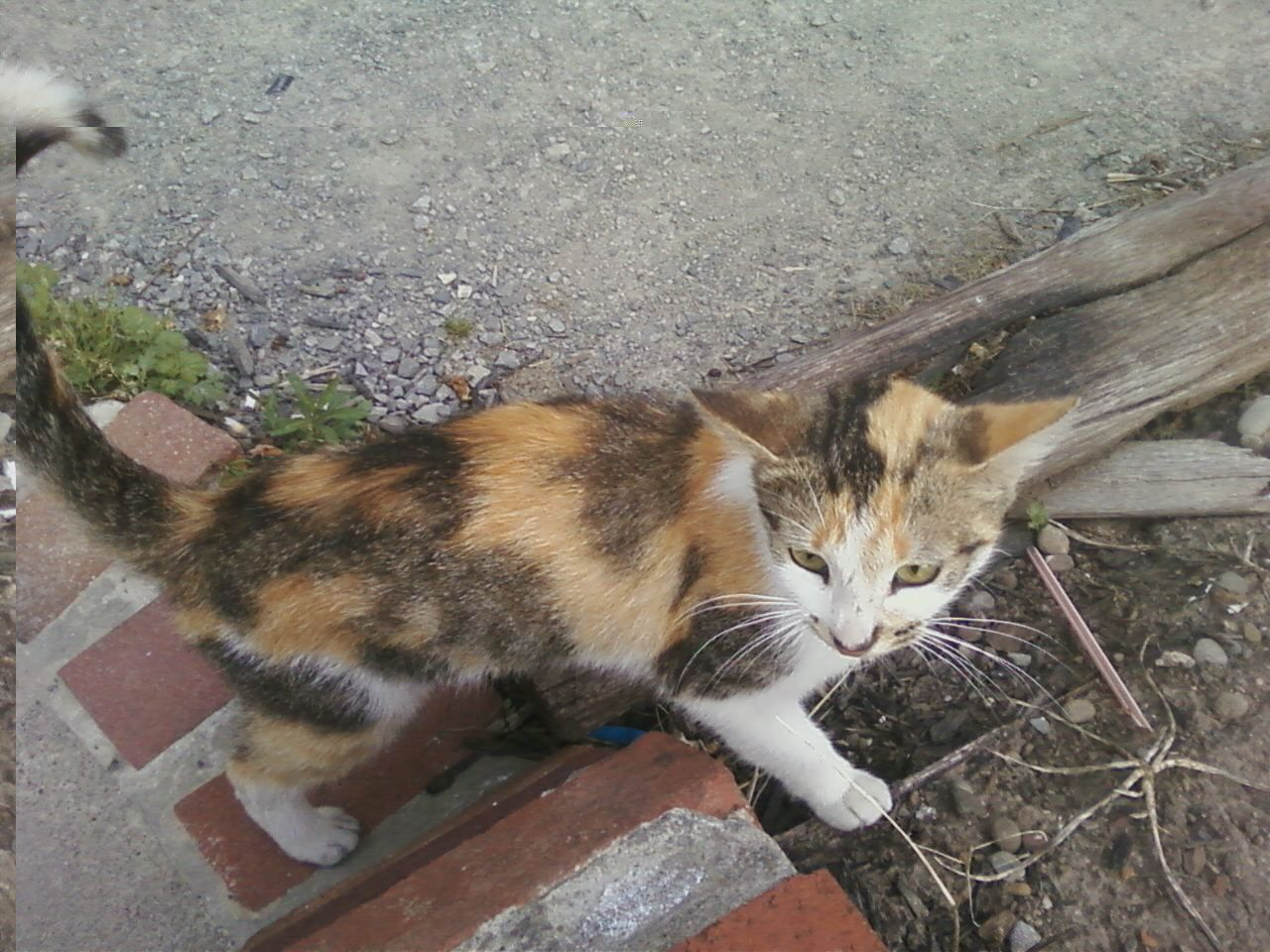 This Stray Cat Needs A Family To Give A Flee Bath And Rabies Shots And That Sort Of Stuff If You Want Her Email Me At Blakesbaby3 Gmail Co Cats Stray Cat Kitty