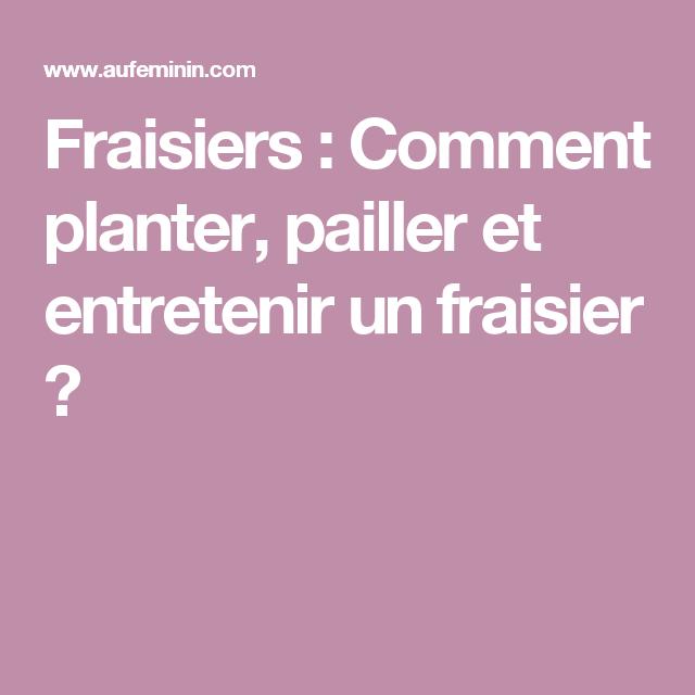 Fraisiers : Comment Planter, Pailler Et Entretenir Un